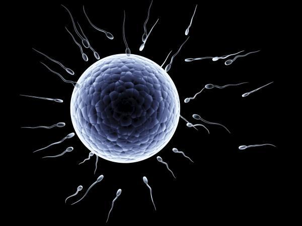 Cómo saber si mis espermatozoides son fértiles - Cómo saber si mi esperma es fértil