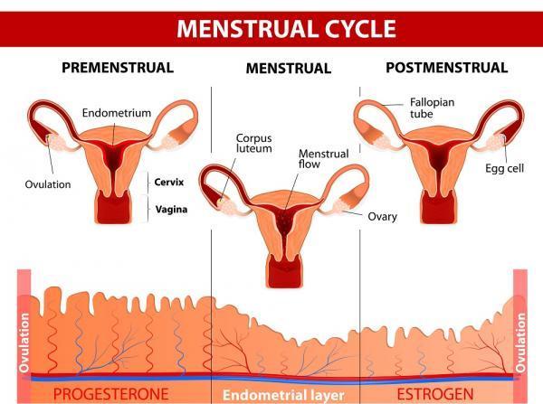 Menstruación escasa: causas - ¿Cómo es la menstruación normal?