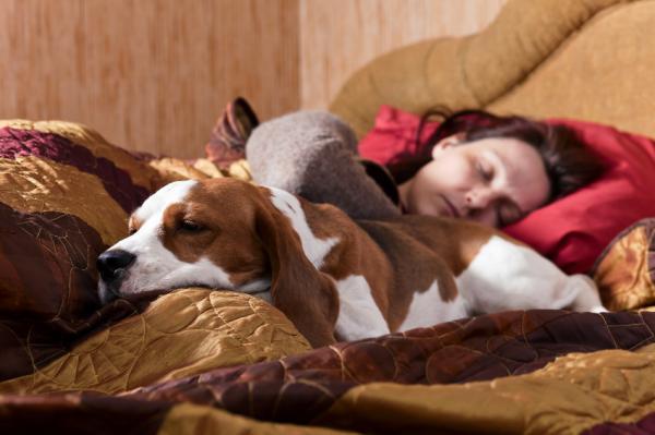 Sarna: síntomas, causas y tratamiento - Causas de la sarna