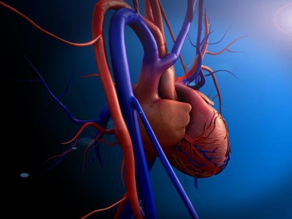 ¿Los soplos en el corazón se curan?