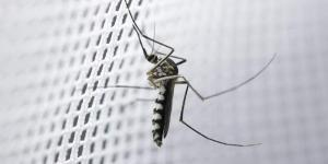 Remedios caseros para que no te piquen los mosquitos
