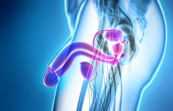 Dolor en el bajo vientre en el hombre: causas, tratamiento y remedios - Dolor en el bajo vientre en el hombre: otras causas