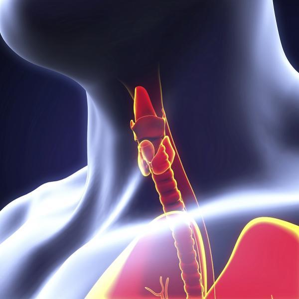 ¿La tirotropina alta engorda? - ¿Qué es la tirotropina?