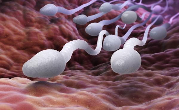 Por qué eyaculo poco esperma y sin fuerza