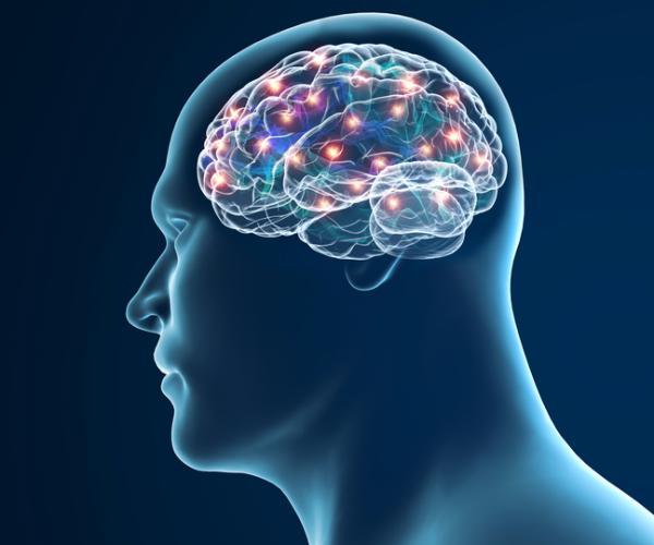 Efectos del alcohol en el cerebro a largo plazo - Alteraciones en el hipocampo del cerebro producidas por el alcohol