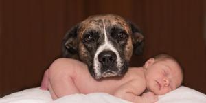 ¿Es bueno tener perros con bebés?