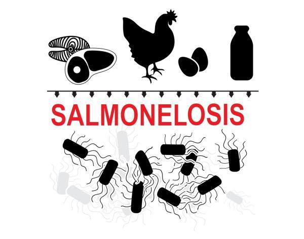 ¿La salmonelosis es contagiosa? - Causas de la salmonelosis