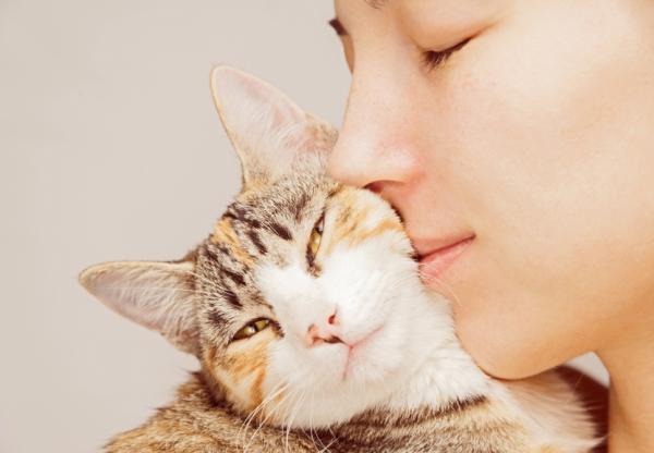 Vivir con gatos reduce el estrés y beneficia la salud