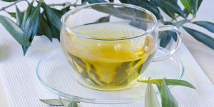 Hojas de olivo: propiedades curativas