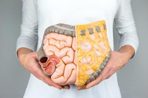 Regula el tránsito intestinal
