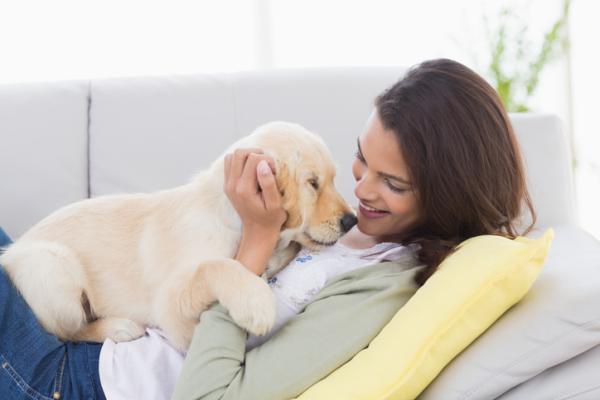 ¿Es malo tener perros estando embarazada? - Estoy embarazada, ¿qué debo hacer con mi perro?