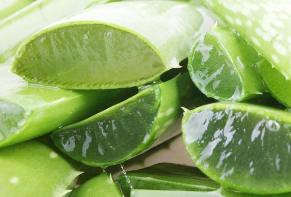 Hongos en las axilas: por qué salen y remedios caseros - Aloe vera, gran antiséptico y regenerador natural