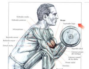 Ejercicios para bíceps - Curl de bíceps en banco