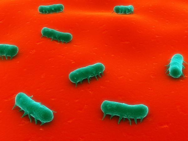 Diarrea verde: causas y tratamiento - Diarrea verde en adultos: causas