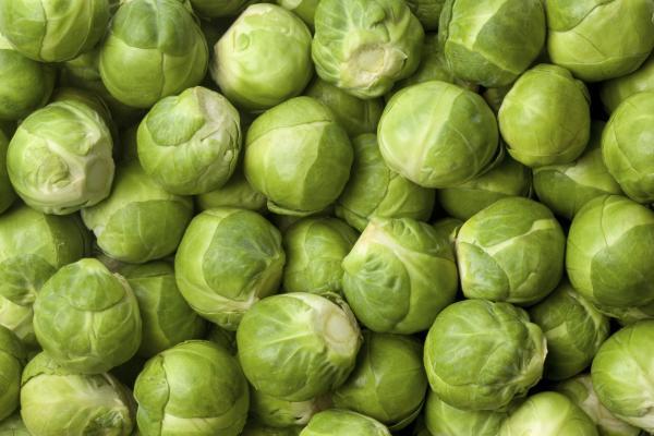 Alimentos con glutamina - lista muy completa - Verduras, ideales para conseguir glutamina