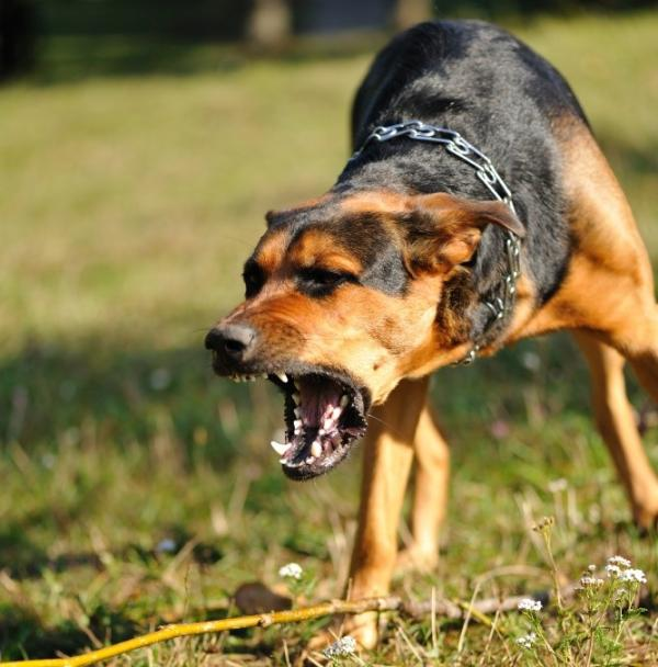 Síntomas de la rabia en humanos por mordedura de perro - Qué es y cómo se contagia la rabia