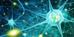 Diferencias entre sistema nervioso simpático y parasimpático