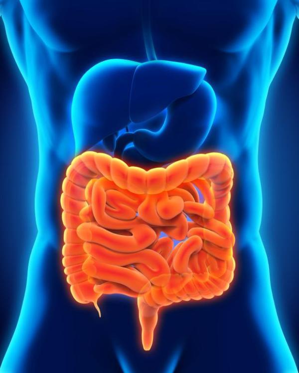 Cólon irritável: sintomas, tratamento e causas - Cólon irritável - o que é?