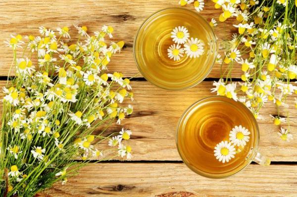 6 Chás para descer a menstruação - Chá de camomila para menstruação