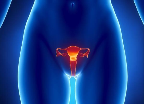 Ovulação dolorosa: causas - Secreção de líquido do folículo ovárico