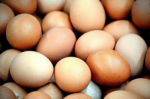 O que grávida não pode comer de jeito nenhum - O que a grávida não pode comer: precaução com o consumo de ovo