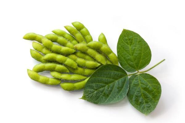 Alimentos que aumentam o estrogênio - Soja em grão