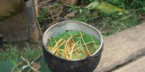 Ayahuasca: o que é, para que serve e efeitos