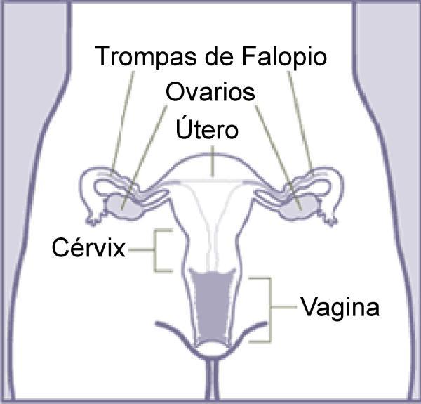 Dor no períneo: causas e como aliviá-la - Dor no períneo feminino